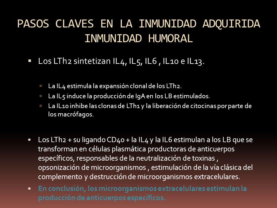 PASOS CLAVES EN LA INMUNIDAD ADQUIRIDA INMUNIDAD HUMORAL