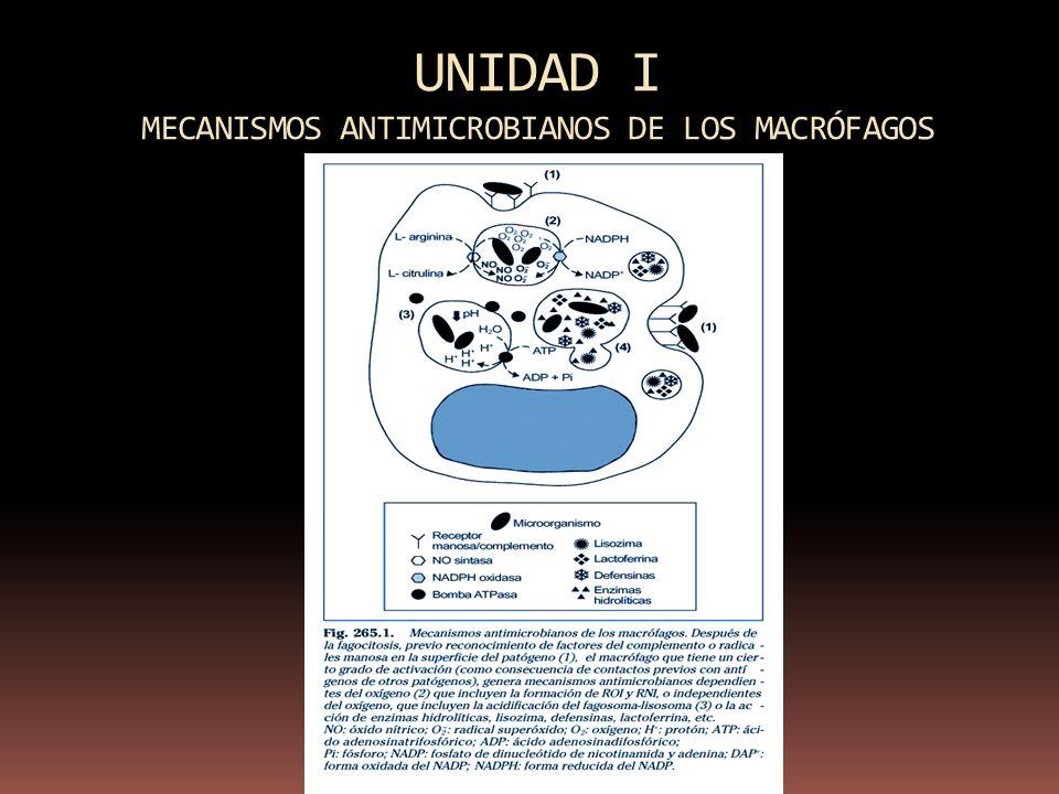 UNIDAD I MECANISMOS ANTIMICROBIANOS DE LOS MACRÓFAGOS