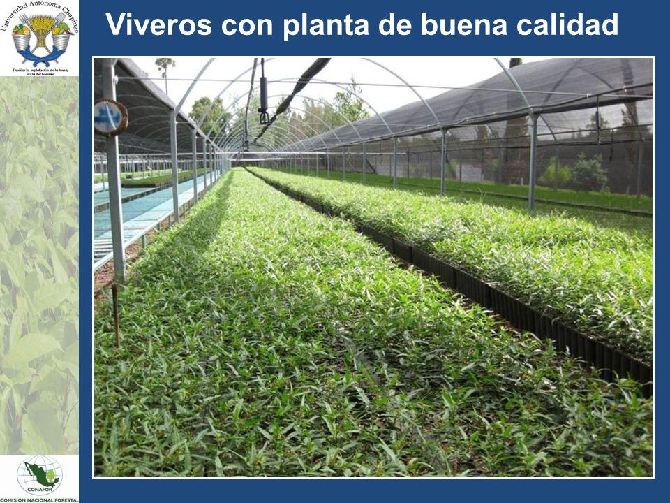 Universidad aut noma chapingo comisi n nacional forestal for Viveros plantas en temuco