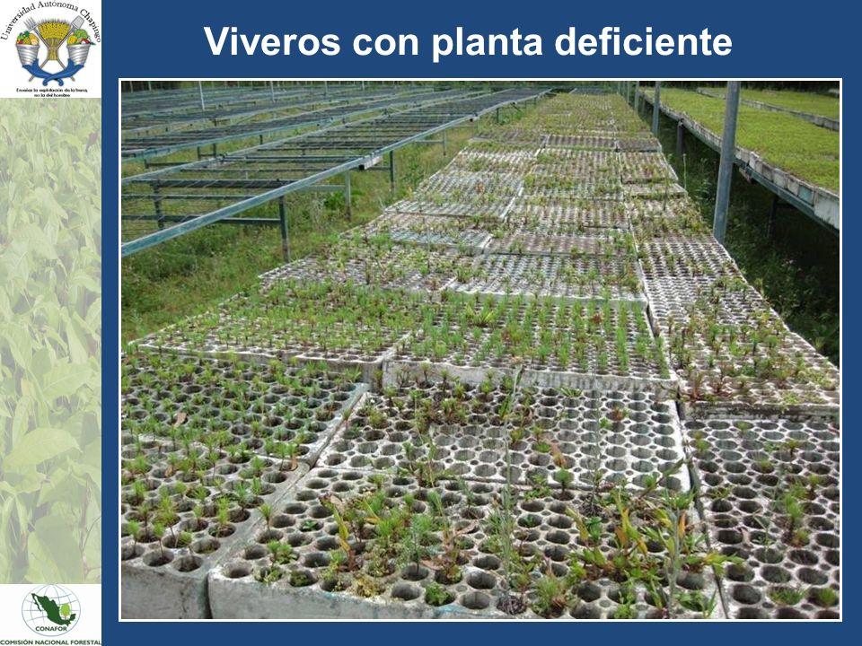 Viveros con planta deficiente