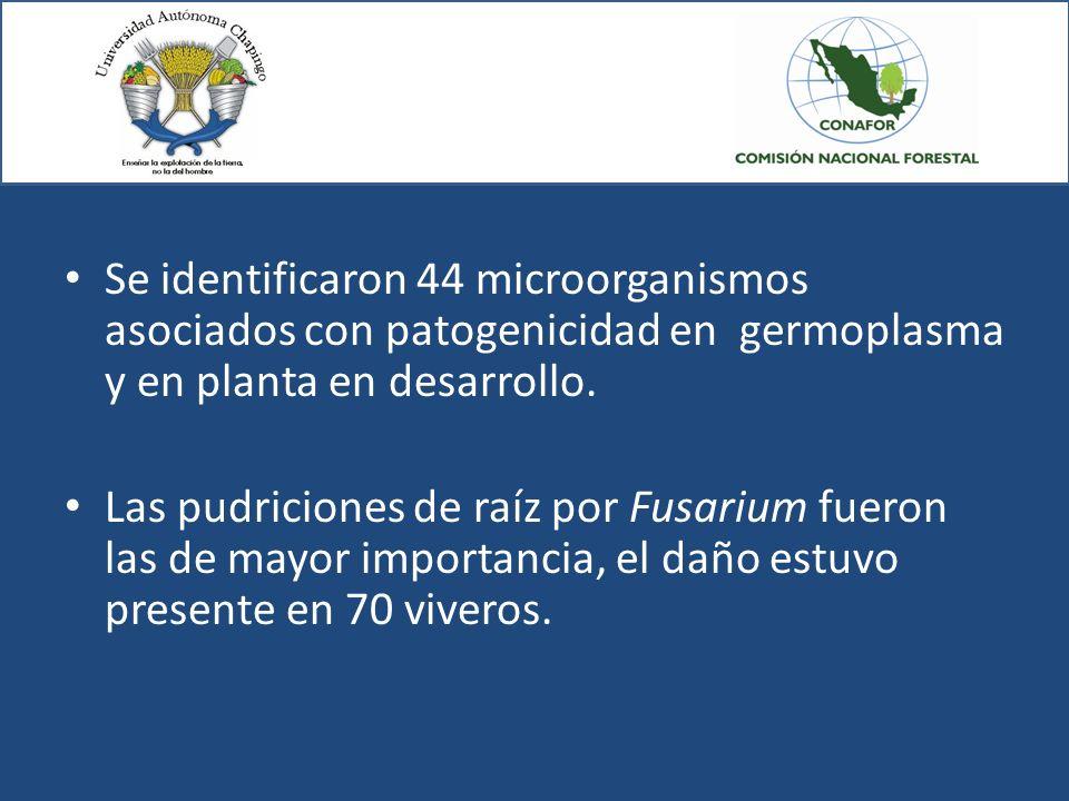 Se identificaron 44 microorganismos asociados con patogenicidad en germoplasma y en planta en desarrollo.