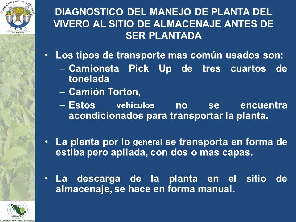 DIAGNOSTICO DEL MANEJO DE PLANTA DEL VIVERO AL SITIO DE ALMACENAJE ANTES DE SER PLANTADA