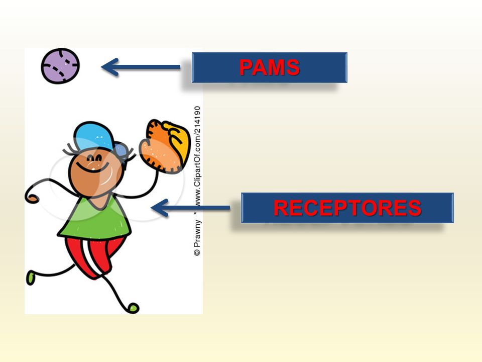 PAMS RECEPTORES