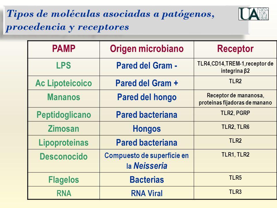 Tipos de moléculas asociadas a patógenos, procedencia y receptores