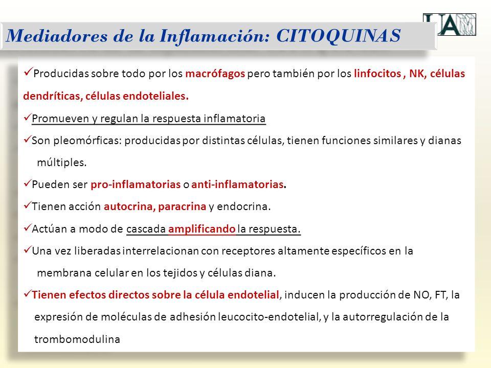 Mediadores de la Inflamación: CITOQUINAS