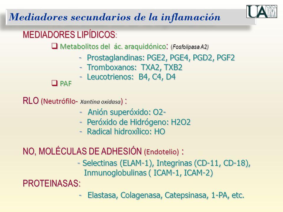 Mediadores secundarios de la inflamación