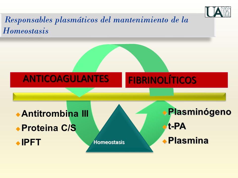 Responsables plasmáticos del mantenimiento de la Homeostasis