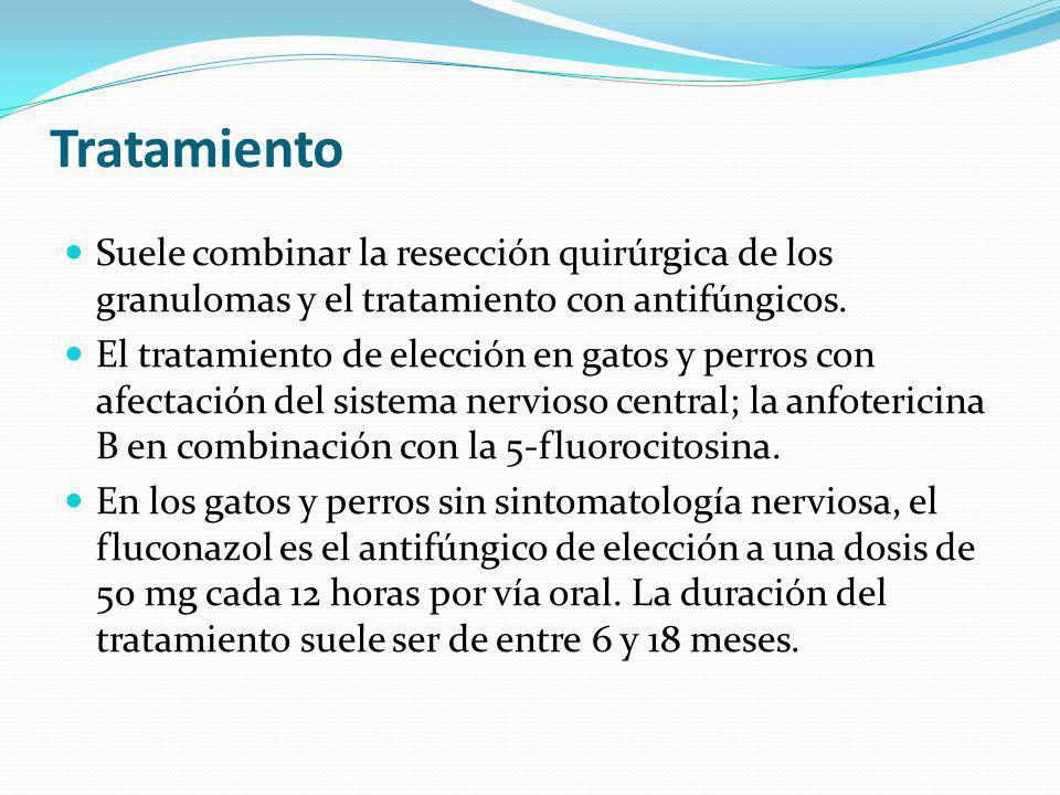 Tratamiento Suele combinar la resección quirúrgica de los granulomas y el tratamiento con antifúngicos.