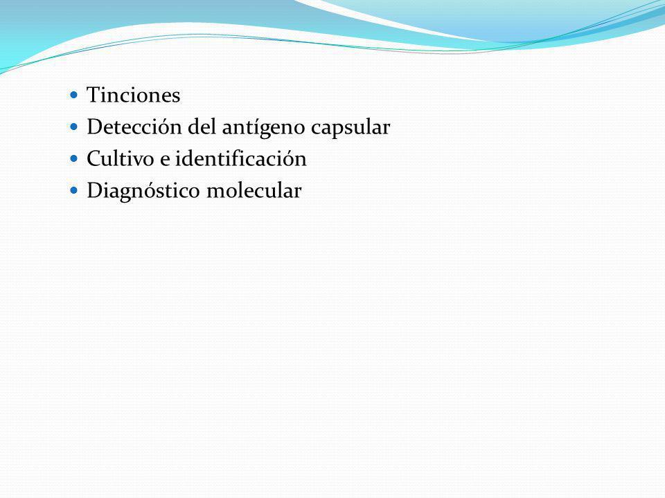 Tinciones Detección del antígeno capsular Cultivo e identificación Diagnóstico molecular