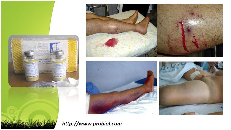Fenol http://www.probiol.com