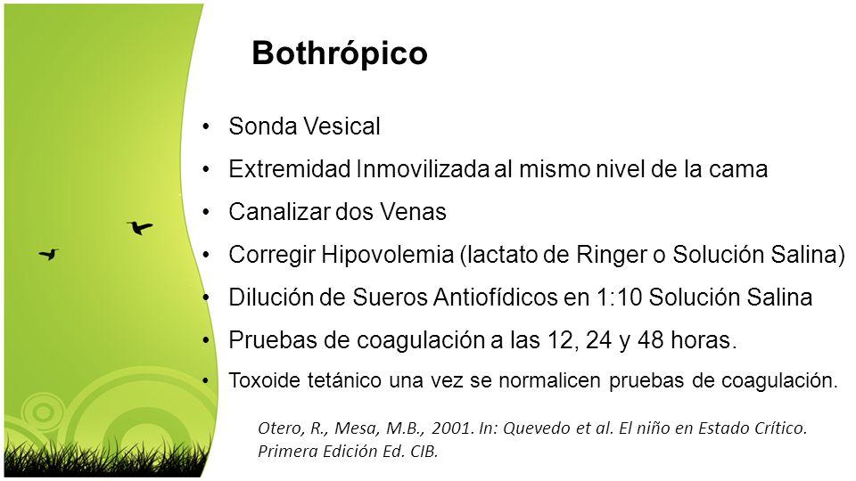 Bothrópico Sonda Vesical