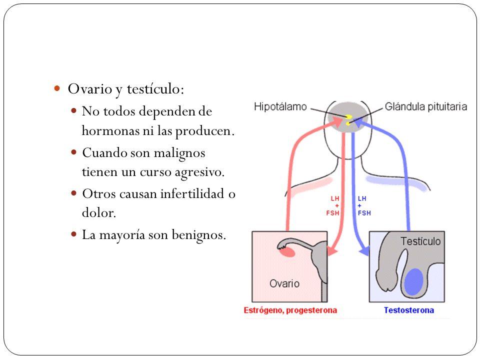 Ovario y testículo: No todos dependen de hormonas ni las producen.