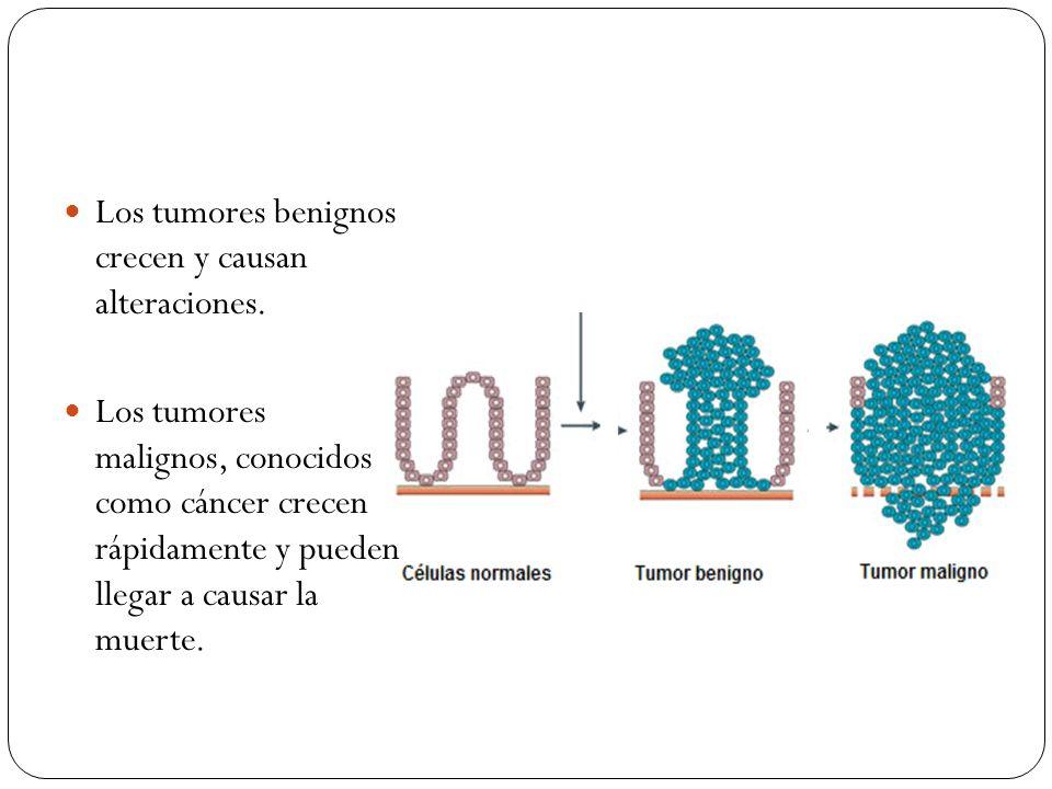 Los tumores benignos crecen y causan alteraciones.