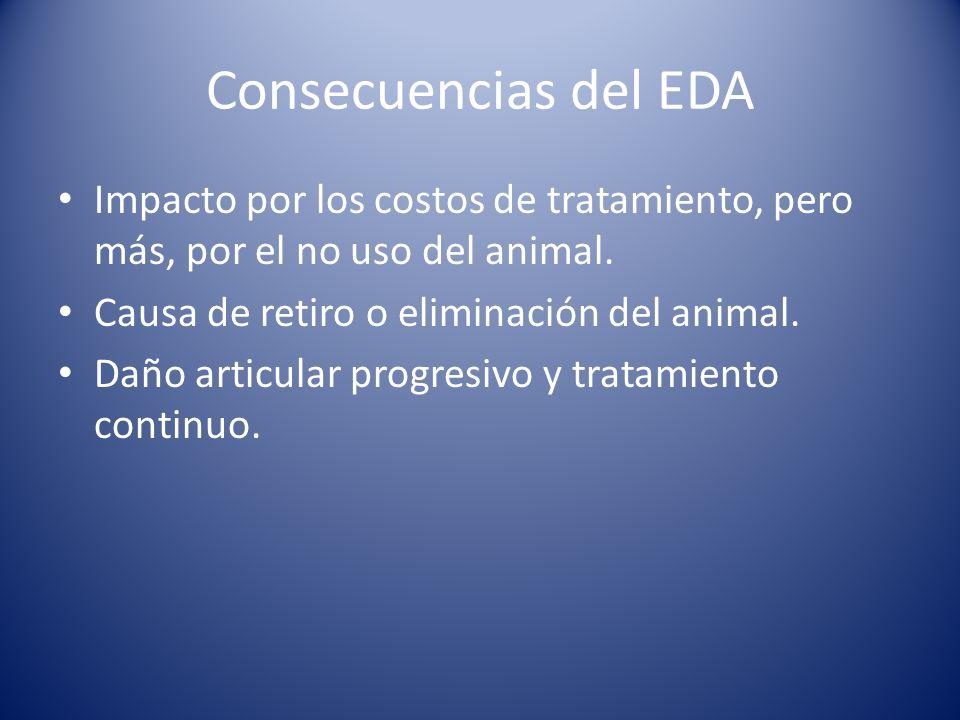 Consecuencias del EDA Impacto por los costos de tratamiento, pero más, por el no uso del animal. Causa de retiro o eliminación del animal.