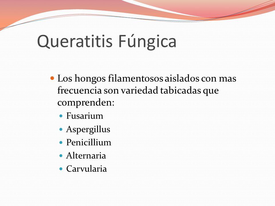 Queratitis Fúngica Los hongos filamentosos aislados con mas frecuencia son variedad tabicadas que comprenden: