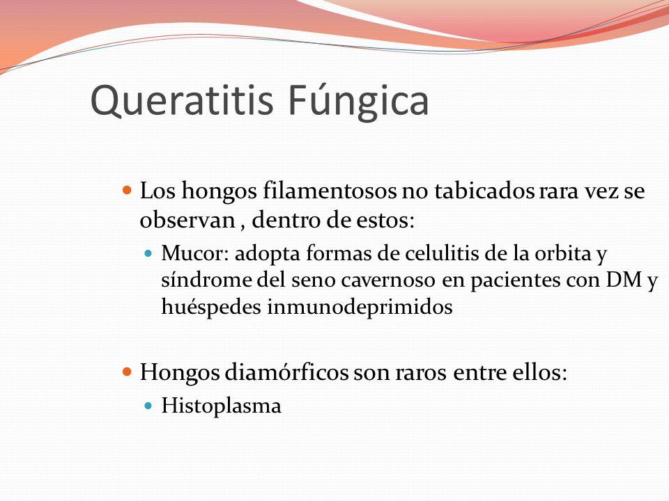 Queratitis Fúngica Los hongos filamentosos no tabicados rara vez se observan , dentro de estos: