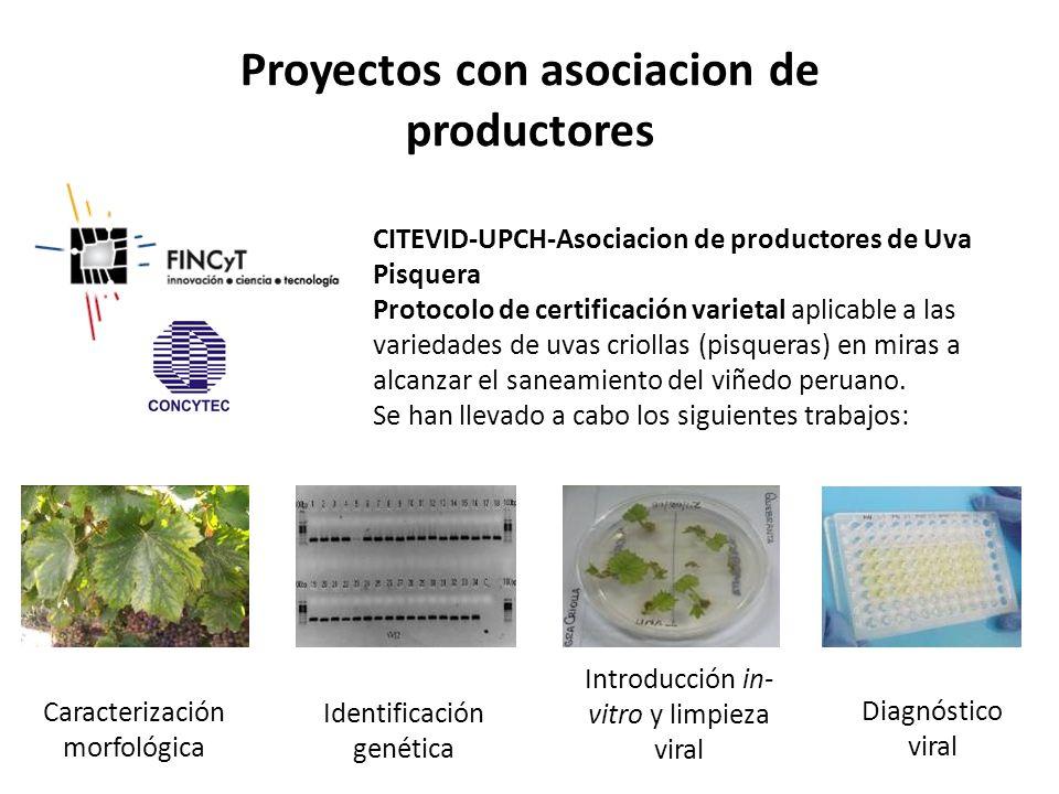 Proyectos con asociacion de productores