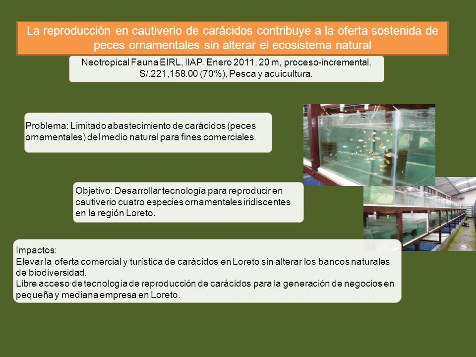 Consejo nacional de ciencia tecnologia e innovaci n for Reproduccion de peces ornamentales