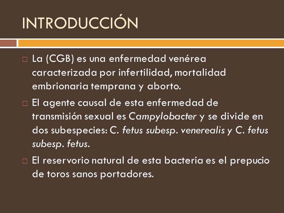 INTRODUCCIÓN La (CGB) es una enfermedad venérea caracterizada por infertilidad, mortalidad embrionaria temprana y aborto.