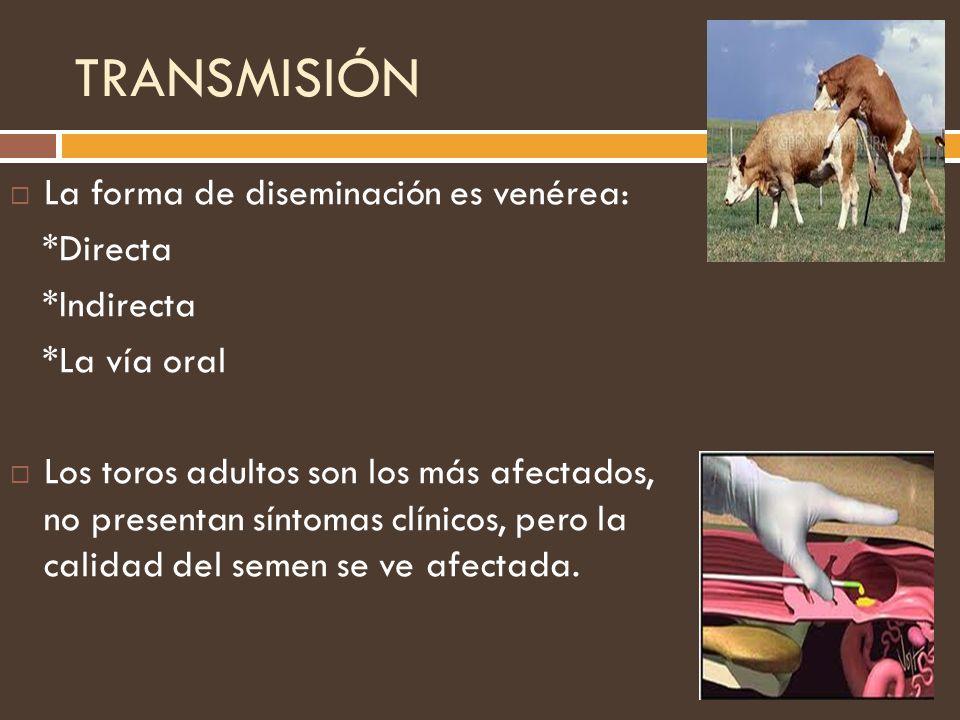 TRANSMISIÓN La forma de diseminación es venérea: *Directa *Indirecta