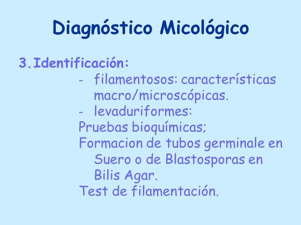 Diagnóstico Micológico