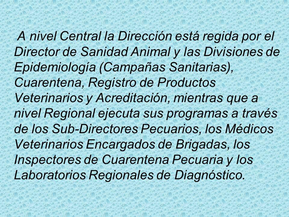 A nivel Central la Dirección está regida por el Director de Sanidad Animal y las Divisiones de Epidemiología (Campañas Sanitarias), Cuarentena, Registro de Productos Veterinarios y Acreditación, mientras que a nivel Regional ejecuta sus programas a través de los Sub-Directores Pecuarios, los Médicos Veterinarios Encargados de Brigadas, los Inspectores de Cuarentena Pecuaria y los Laboratorios Regionales de Diagnóstico.