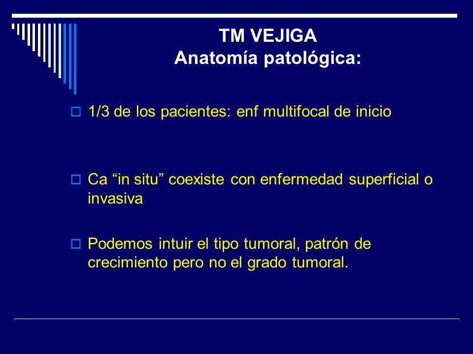TM VEJIGA Anatomía patológica: