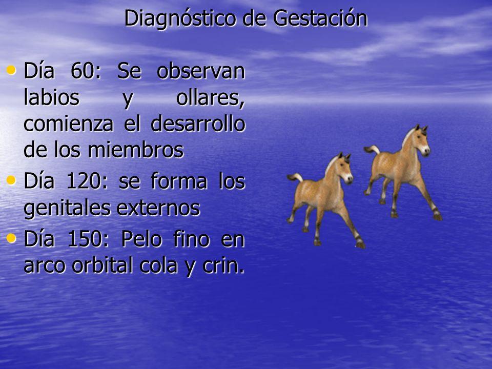 Diagnóstico de Gestación