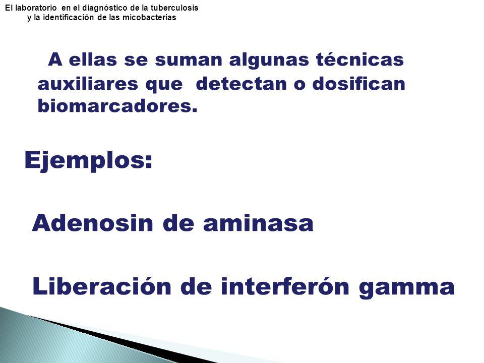 Liberación de interferón gamma