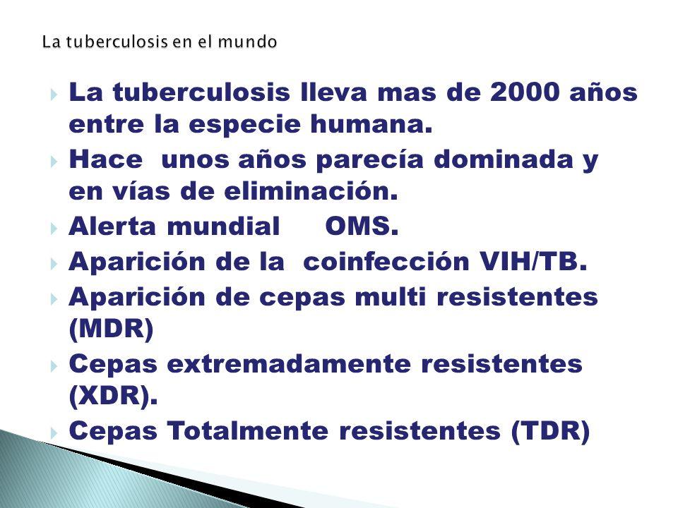 La tuberculosis en el mundo