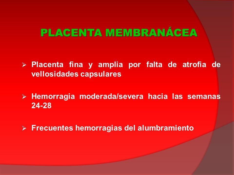 PLACENTA MEMBRANÁCEA Placenta fina y amplia por falta de atrofia de vellosidades capsulares. Hemorragia moderada/severa hacia las semanas 24-28.