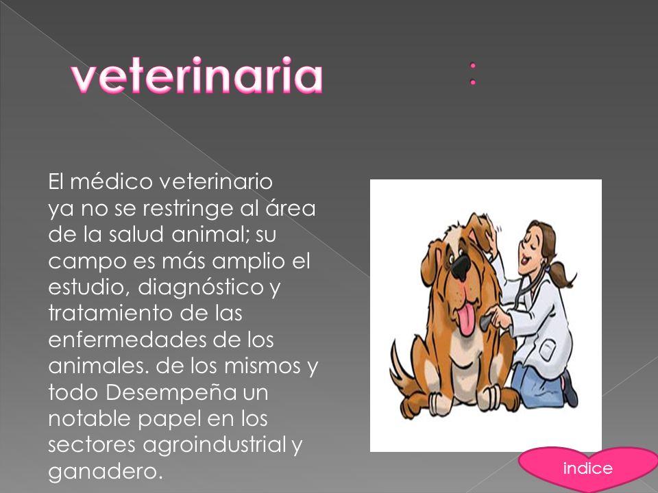 veterinaria : El médico veterinario