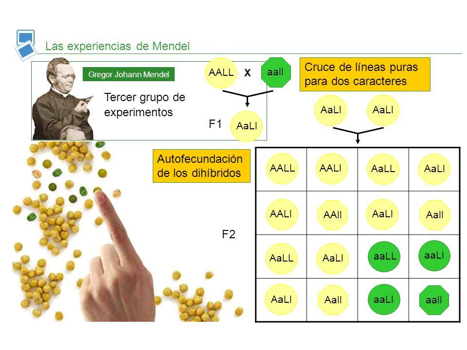 Las experiencias de Mendel