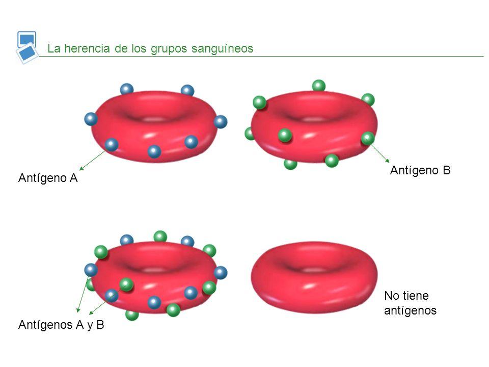 La herencia de los grupos sanguíneos