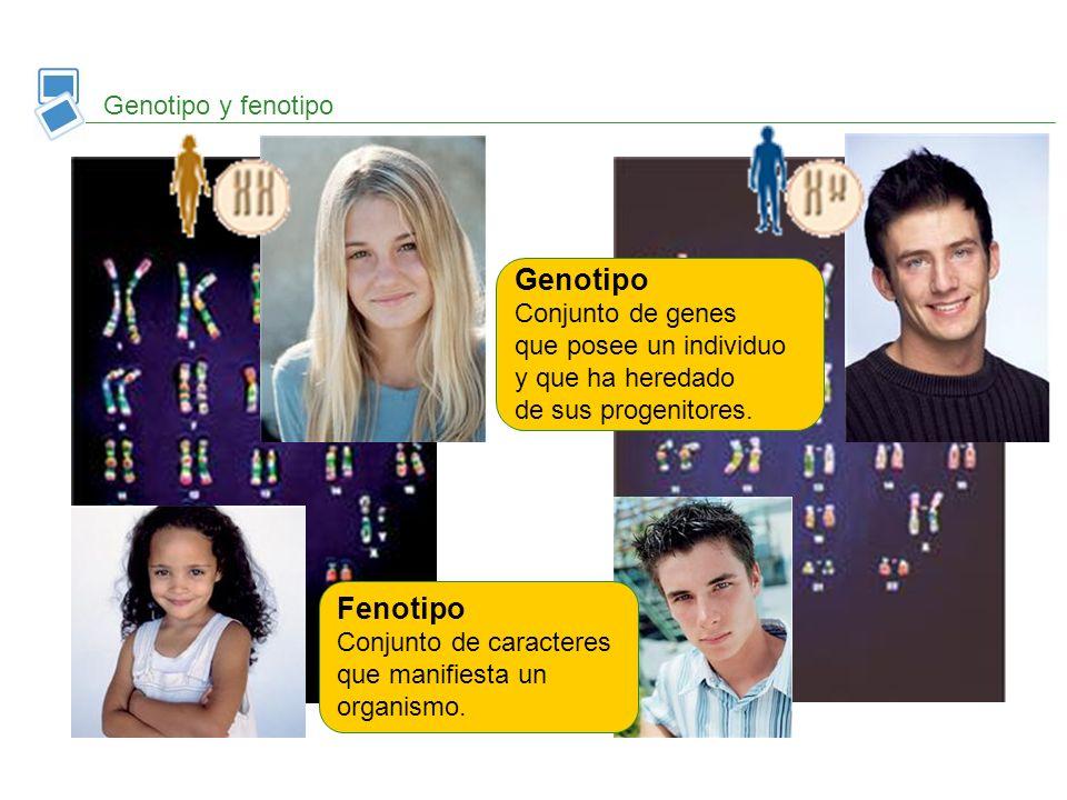 Genotipo Fenotipo Genotipo y fenotipo