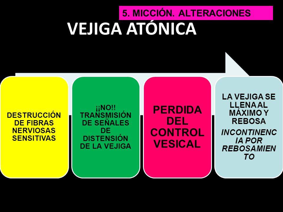 VEJIGA ATÓNICA PERDIDA DEL CONTROL VESICAL 5. Micción. Alteraciones