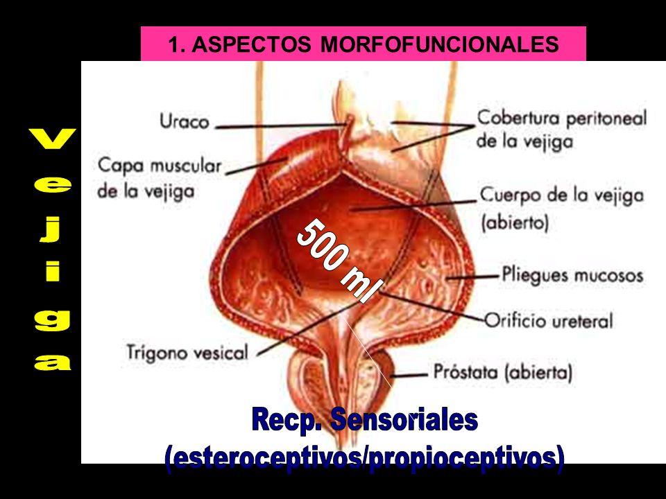 1. ASPECTOS MORFOFUNCIONALES
