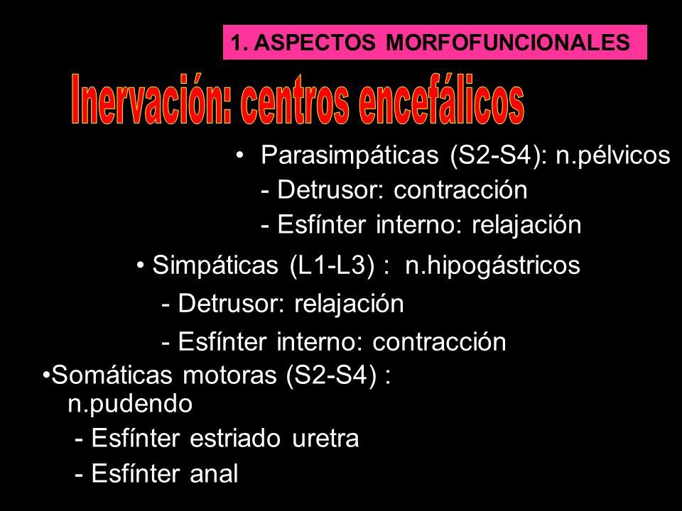 Inervación: centros encefálicos