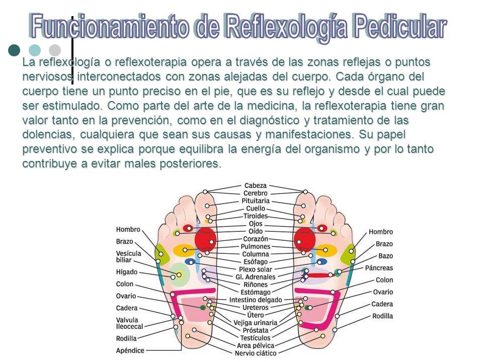 Funcionamiento de Reflexología Pedicular