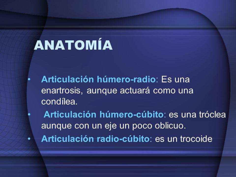 ANATOMÍA Articulación húmero-radio: Es una enartrosis, aunque actuará como una condílea.