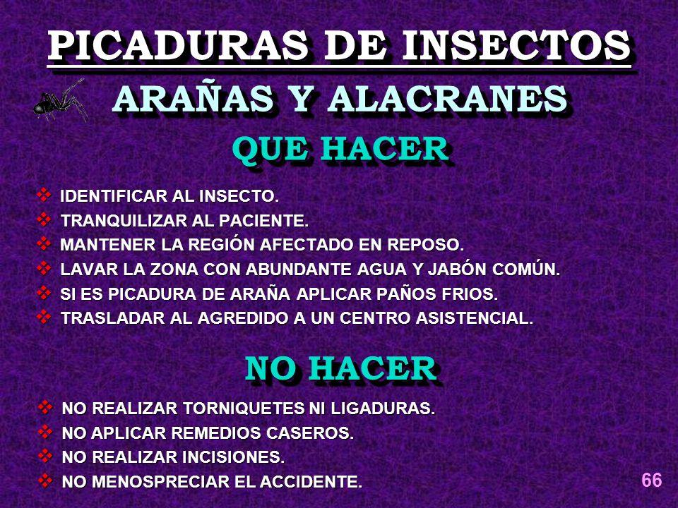 PICADURAS DE INSECTOS ARAÑAS Y ALACRANES QUE HACER NO HACER 66