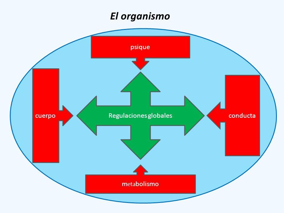 Regulaciones globales