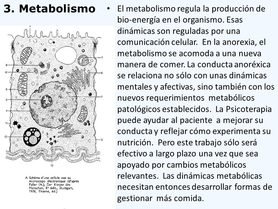 3. Metabolismo .