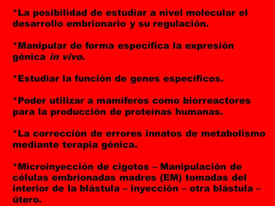 *La posibilidad de estudiar a nivel molecular el desarrollo embrionario y su regulación.