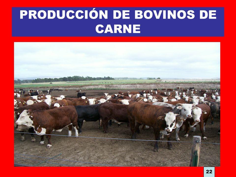 PRODUCCIÓN DE BOVINOS DE CARNE