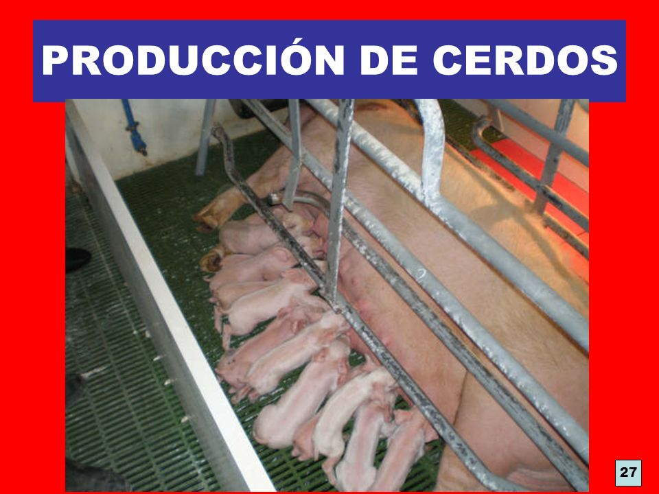 PRODUCCIÓN DE CERDOS 27