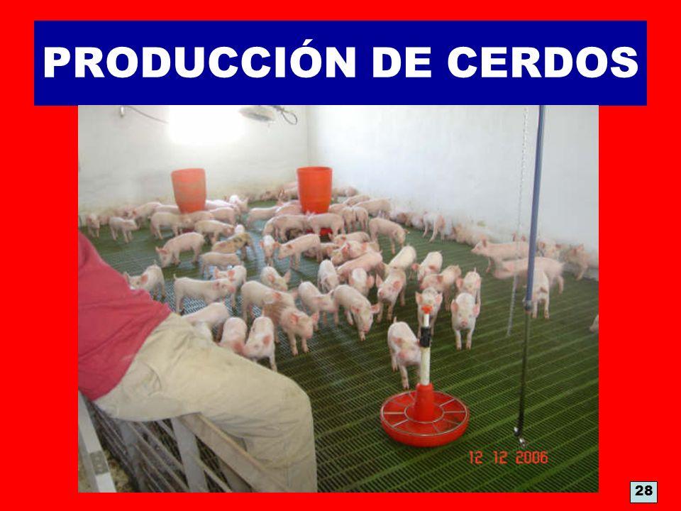 PRODUCCIÓN DE CERDOS 28