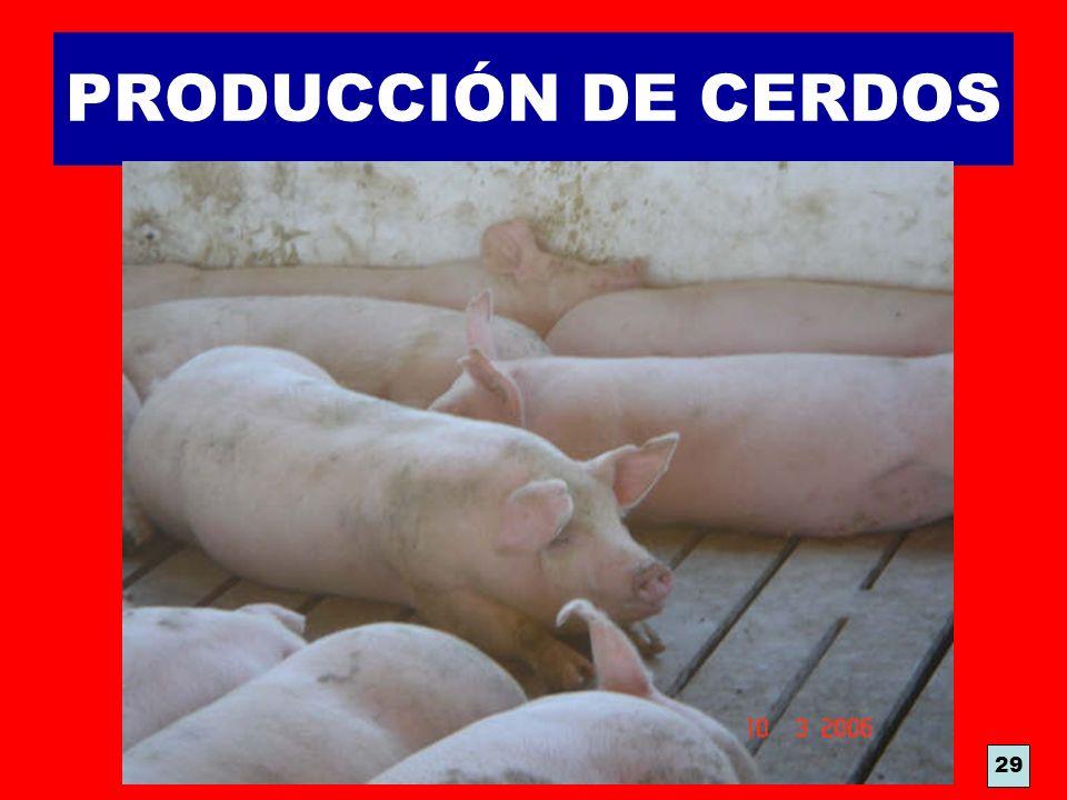 PRODUCCIÓN DE CERDOS 29