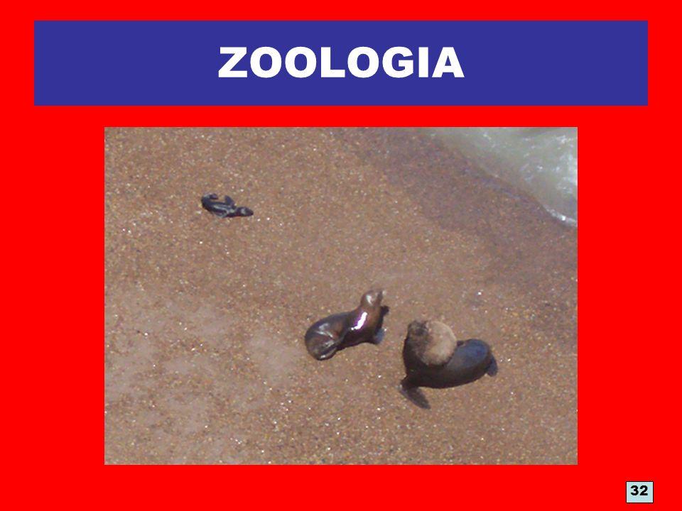 ZOOLOGIA LOBOS MARINOS 32