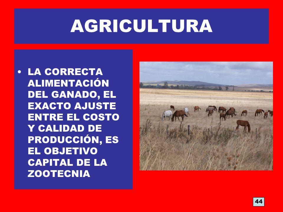 AGRICULTURA LA CORRECTA ALIMENTACIÓN DEL GANADO, EL EXACTO AJUSTE ENTRE EL COSTO Y CALIDAD DE PRODUCCIÓN, ES EL OBJETIVO CAPITAL DE LA ZOOTECNIA.